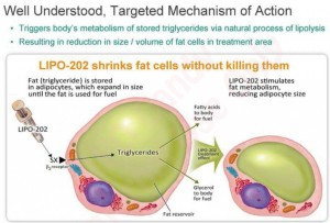 NEOT, Neothetics, Lipo 202 causes fat cell shrinkage